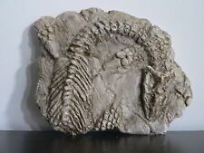 Dinosaur fossil replica (Plesiosaurus)