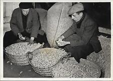 PHOTO FRANCE PRESSE VOIR janvier 1943 + BOUCHONS de liège et BOUCHONNIERS