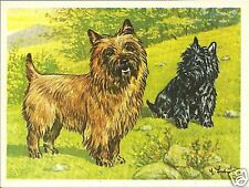 Rare 1952 Dog Art Full Body Print Austria Tobacco Company Bildwerk Cairn Terrier