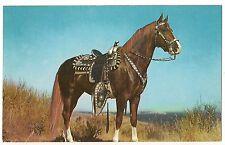 HOSS Dark Brown HORSE Equine Postcard Vintage Stallion Gelding Saddle Western