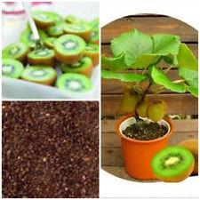 100 Seeds Mini Kiwi Plant Fruit Thailand Kiwi Garden Bonsai Rare Tree Unique Uk
