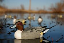 Six Avery Greenhead Gear GHG Over Size Pintail Duck Decoys Fixed Weighted Keels
