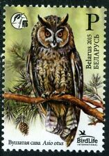 2015. Belarus. Bird of the year. Long-eared owl.Stamp.MNH