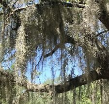 Organic Spanish Moss~Live Air Plant~1 Gallon Bag~Fresh Picked! From Joe's Frogs