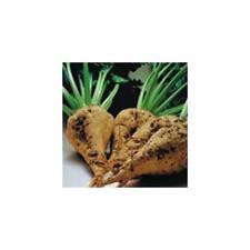 Beet Sugar Great Heirloom Vegetable Seeds By Seed Kingdom 300 Seeds