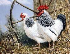 Old Vintage Print Kitchen Art Decor LIGHT SUSSEX Rooster Farm Yard Hen Chicken
