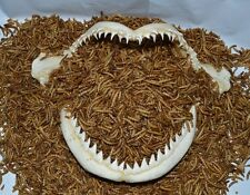1/8 lb.+ 1/2 oz.FREE~ Premium Freeze Dried Mealworms~OSCAR~ CICHLIDS Fish Food