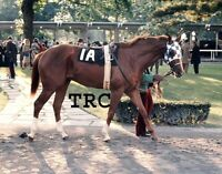SECRETARIAT - ORIGINAL 1972 8X10 WALKING RING PHOTO AT THE CHAMPAGNE STAKES!