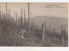 Le Foret Des Vosges Reichackerkopf Aspect de la Foret Postcard France 443a