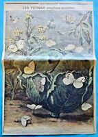 XIX Ancienne Gravure les Piérides Papillons Nuisibles Aubépine Chrysalide Gazé