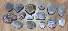 Michigan Fossil Plates Crinoids Corals Lightning Stone Beach Rocks Crafts Rare