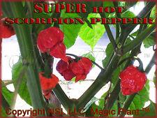 Trinidad Moruga Scorpion Chili Pepper 1kg/2.2lb (world hottest Chili in 2012)
