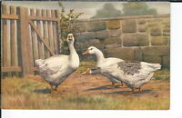 AX-236 - Three Geese Artist Signed M.A. 1907-1915 Golden Age Postcard Vintage