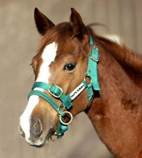 CS Monty Roberts Dually Halter headcollar & DVD EXTRA SMALL Green