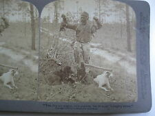 1903 BLACK AMERICANA MAN HOLDING TWO POSSUMS AFTER CHOPPING TREE DOWN STEREOVIEW