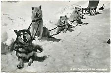 CHIENS DE TRAINEAU. DOGS SLED. HUSKY
