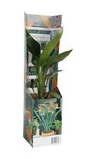 Paradiesvogelblume zimmerpflanzen g nstig kaufen ebay - Zimmerpflanze sonnig ...