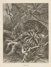 Jaguar Ambush Africa Jungle Engraving 1885 Home Decor Antique Art Print