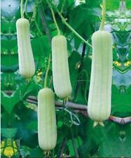 5pcs vegetable Seeds White cream loofah