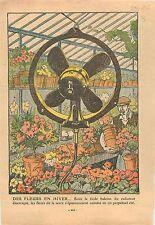 Greenhouse glasshouse Flowers Horticulture Horticulteur Fleur Serre Veranda 1932