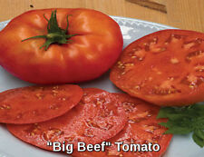 "200+ BEEFSTEAK   ORGANIC ""Big Beef "" Fresh New Tomato Seeds    FREE SHIPPING"