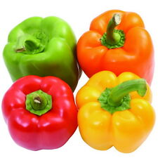 30pcs Colorful Sweet Pepper Seeds Capsicum Frutescens Original Packaging Seed