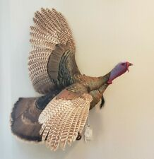 Eastern or Rio Grande Turkey taxidermy mount flying, OUTSTANDING
