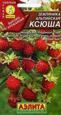 "Alpine Strawberry ""Ksjusha""  Russian High Quality seeds"