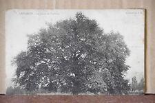 Cpa carte postale Lamanon (Bouches-du-Rhône - 13) le géant de provence