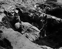 OLD LARGE MILITARY PHOTO, WWII Battle Iwo Jima, Doberman Pinscher on Guard