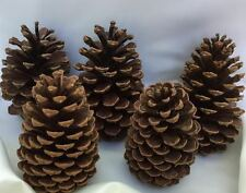 "LARGE PINE CONES, 5""-6"", SET OF 8, CRAFTS, HOLIDAYS, DECOR"
