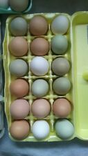 1 Chicken Hatching Eggs - Assorted, purebred or barnyard, bantam or standard