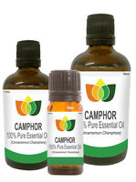 Camphor Essential Oil Pure Natural Authentic Cinnamomum Camphora Aromatherapy
