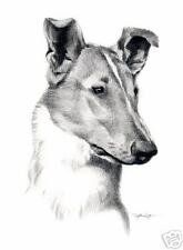 Smooth Collie Art Print Pencil Dog Drawing 8 x 10 Signed by Artist Djr w/Coa