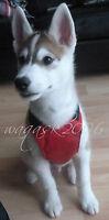 BNWT Dog Puppy Harness, sizes S, M, L, Small, Medium, Large padded car seat belt