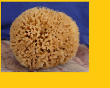 Sea Sponge EXTRA Large 16cm brown = Unbleached honeycomb GREEK KALYMNOS