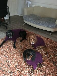 DOG JUMPER - Hotterdog Jumpers Free p&p