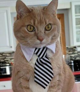 Dog Cat Animal Cute Tie Collar Pet Adjustable Neck Tie US Ship