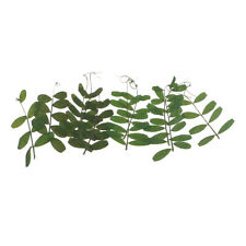 10 Pcs Natural Bean Leaves Dried Pressed Flowers for DIY Bracelet Jewelry