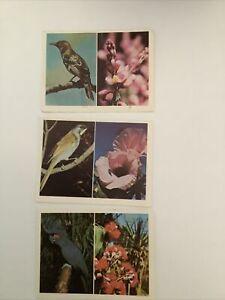 """1976 WEET-BIX AUSTRALIA""""S OWN BIRDS & WILDFLOWERS  3 CARDS F"""