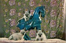 Vintage Postcard Blue Point Siamese Kittens & Horse Columbia Wholesale Supply