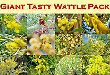 TASTY EDIBLE WATTLES SEEDS,16 x SPECIES,WATTLE PACK,BUSH TUCKER,SEEDS,HERB