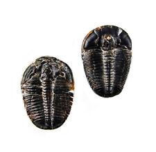 Original Utah Trilobite Fossil Manschettenknöpfe