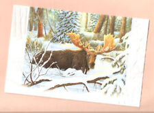 Moose by Carol Decker Embossed Christmas Cards Box of 16