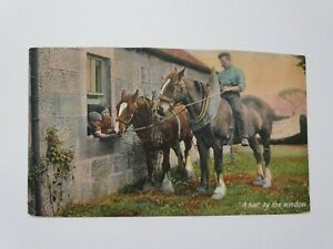 Vintage Postcard, 1900s, Animals - Horses, A Halt By The Window
