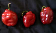 Red Rocoto pepper Capsicum pubescens 25+ seeds
