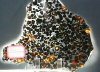 Sericho Pallasite Meteorite from Kenya Africa Habaswein 181.7g complete slice