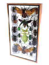 Real Butterfly Insect Bug Taxidermy Display in Framed Box Big Set Gift gpasy 21