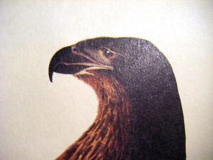 "J.J.Audubon print Bald Eagle Falco Washingtoni (Male) Havell Eng. 15-3/4"" x12"""