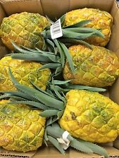 6 Artificial Pineapples